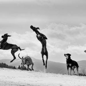 Andet Hundetilbehør
