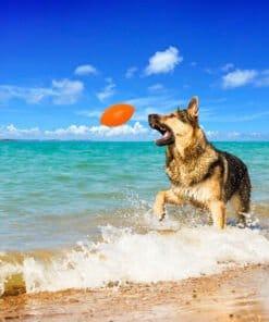PitchDog-Hundebold-Med-Hund